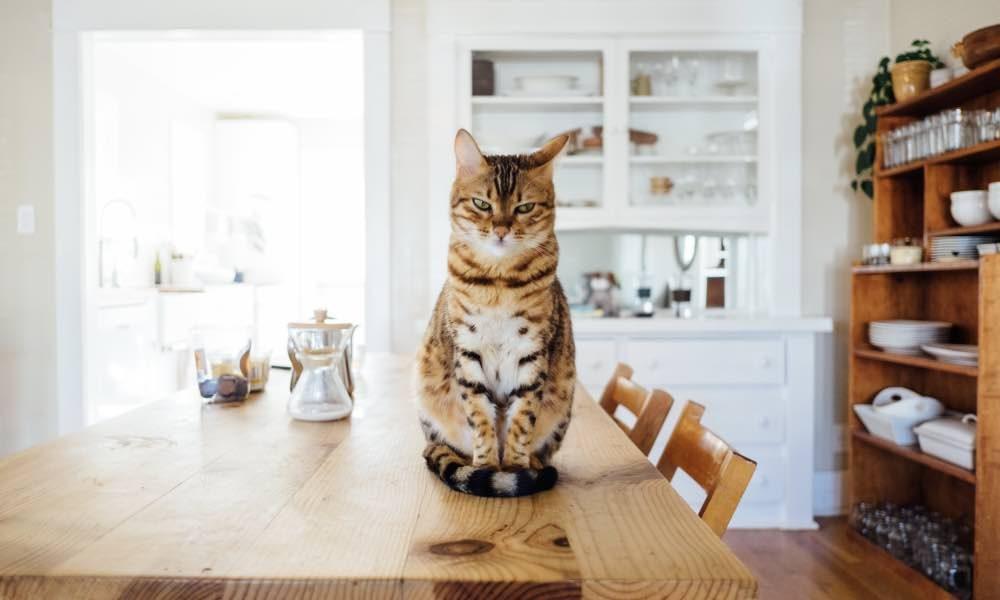 Comment bien faire à manger pour son chat